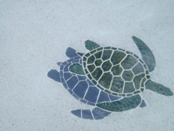 resurfacing residential pool with turtle mosaic tiles - Pool Renovation & Repair | Stahlman Pool Company - Naples, Florida